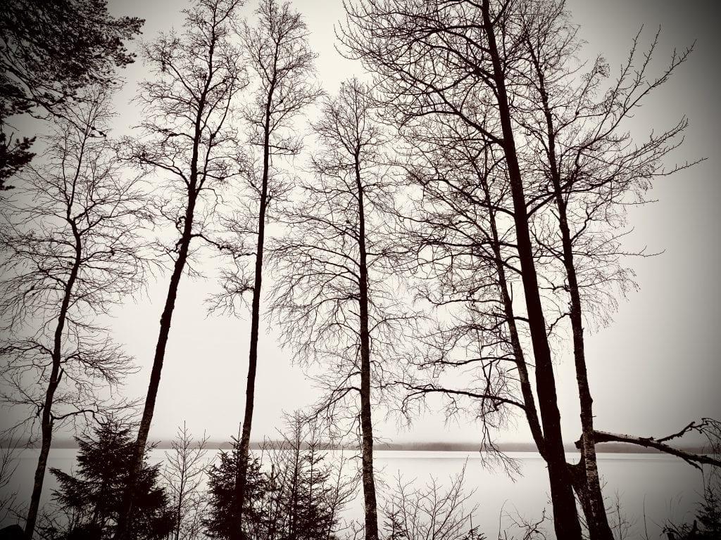 Skog, Finnskogen