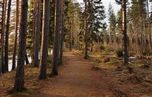 TUR: Onsdagens tur går hit til Myrmoen på Flisa. Alle turer er tilrettelagt for barnefamilier og er for alle barn i alderen 0-12 år. Foto: Barnas Turlag Solør