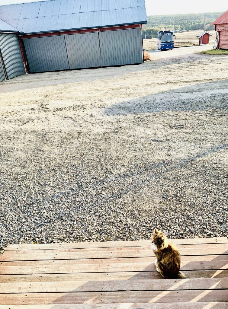 NØSTE: Her på Namnå bor hun blant annet sammen med kattene Nøste og Lucas. Foto: Liv Rønnaug B. Lilleåsen