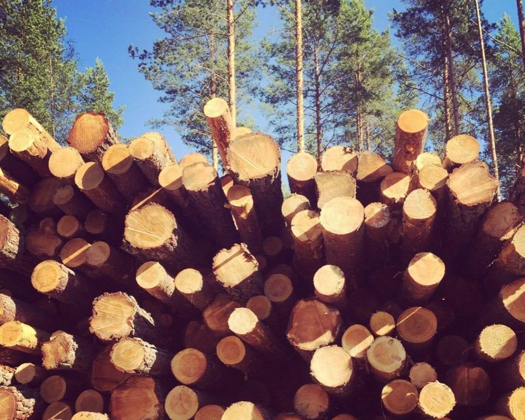 SOLØR: Grue, Åsnes og Våler er med på et prøveprosjekt om å frakte mer tømmer på veiene. Prosjektet startet i slutten av januar, og varer i tre år framover. Foto: Liv Rønnaug B. Lilleåsen