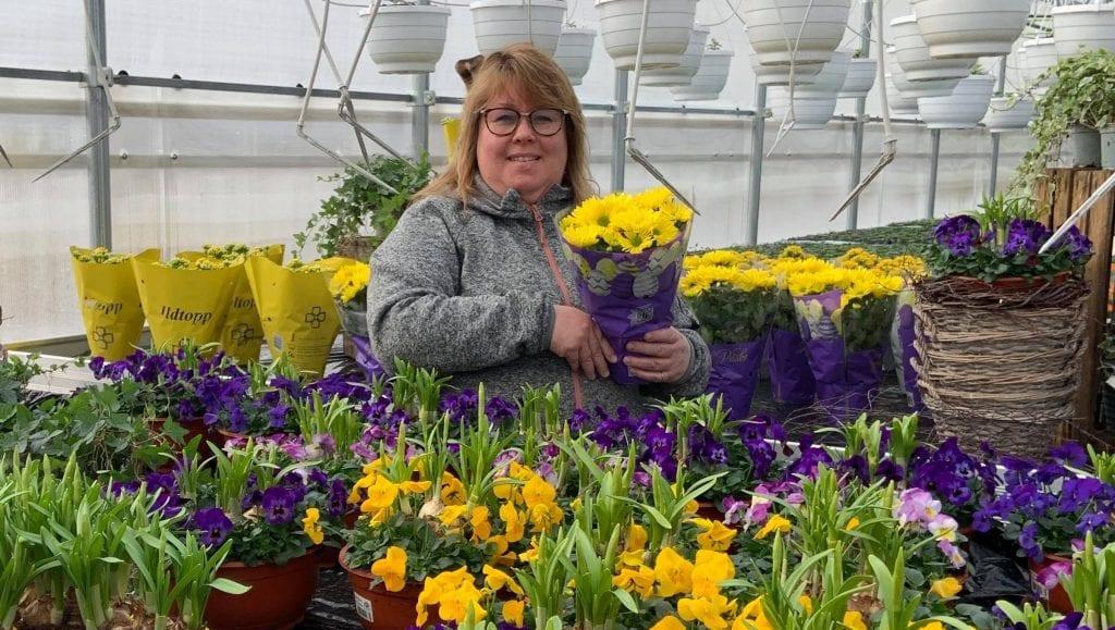 ÅPNER TIL PÅSKE: Grindaker gartneri på Sletta i Åsnes satser enda større i år, og åpner til påske. Siw Monica Holth har tatt ett års permisjon fra jobben sin, og blir nå blomsterdame på heltid.