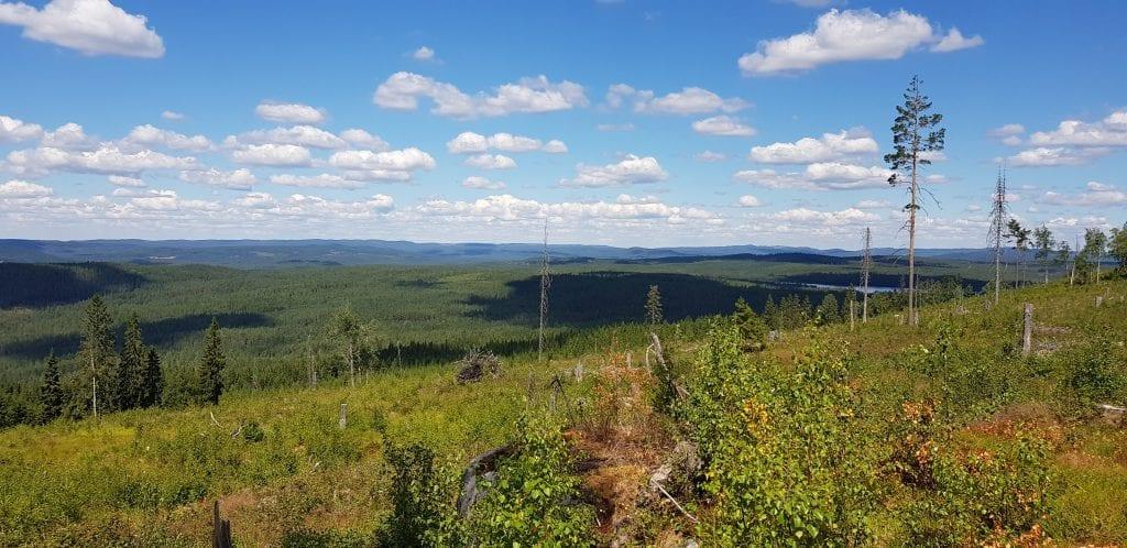 STORE OMRÅDER: På Finnskogen er det god plass til alle som vil gå tur. Nå kan de som vil søke om tilskudd for å bevare kulturlandskapet for framtida. Dette bildet er tatt fra Finnskogleden sommeren 2018. Arkivfoto