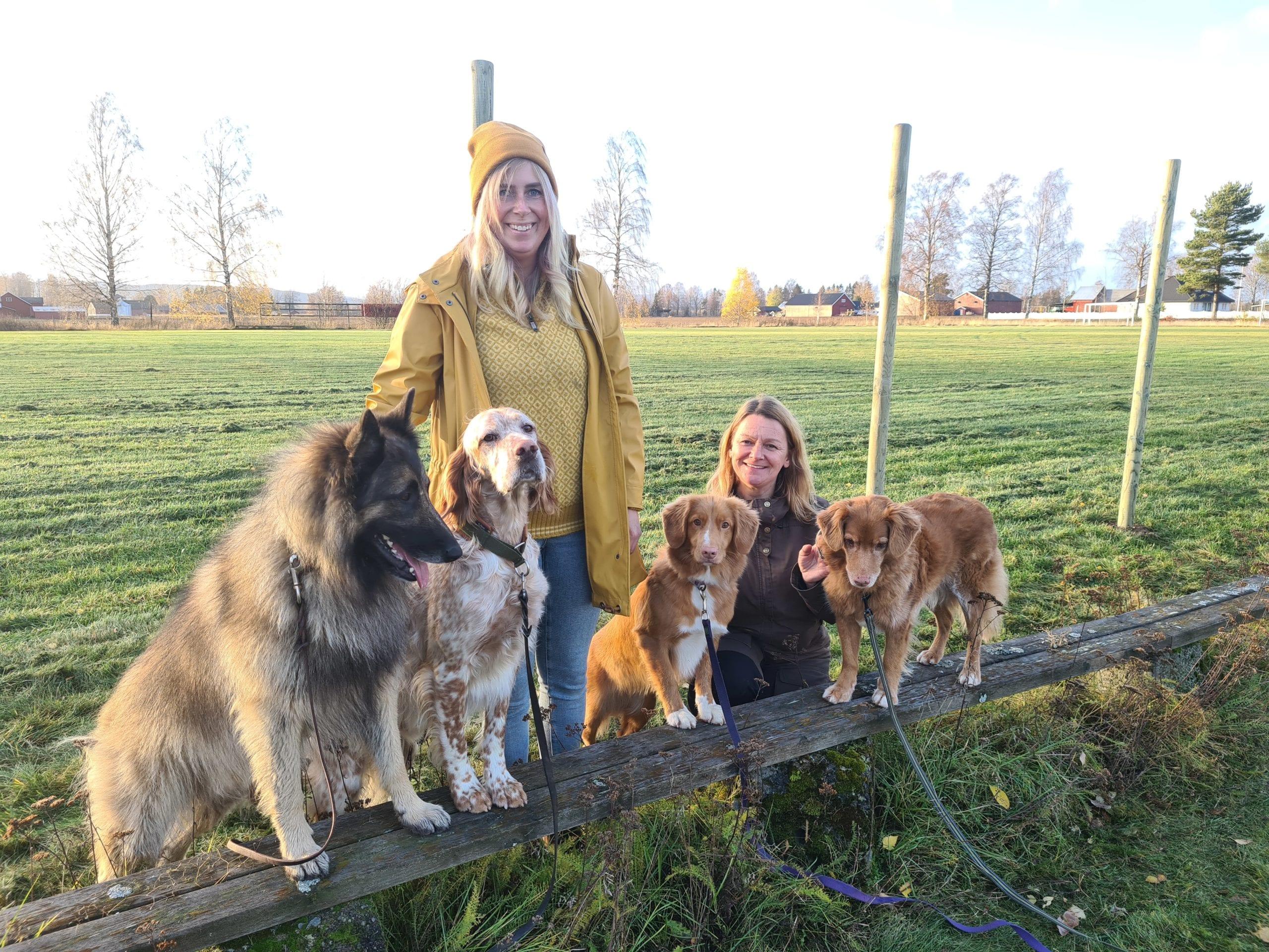SNART KLART FOR TRENING: Idrettsplassen på Namnå leies nå ut til Åsnes og omegn hundeklubb. Frida Lilleberg (til venstre) og Nina W. Nilsen er to av klubbens medlemmer. Fra venstre ser vi hundene Ivrig, Bris, Easy og Kaisa.