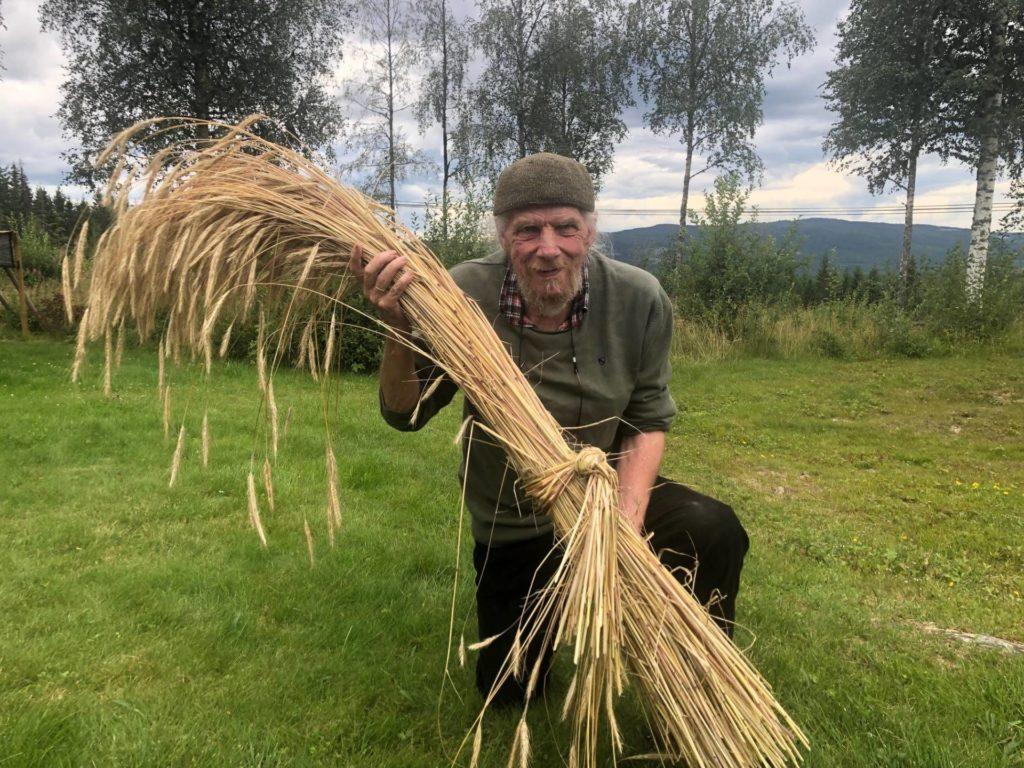 SVEDJERUG: Trond Burud med en bunt med svedjerug. Svedjerug er en møysommelig prosess som tar i alt 3 til 4 år fra man brenner skogen til rugen kan høstes. Dette er ikke høstet i brent aske men fra dyrket jord.